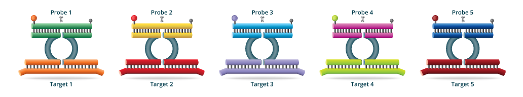 PlexZymeMultiplexing with SpeeDx technology PlexPCR which can maximise the outputs of qPCR instruments.